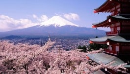 Fuji-san cherry blossoms and pagoda
